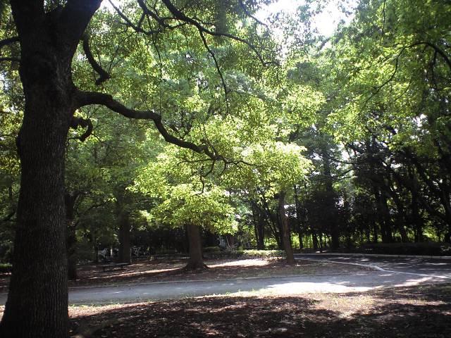 http://www.kameido5.com/map/CA3A0481.JPG