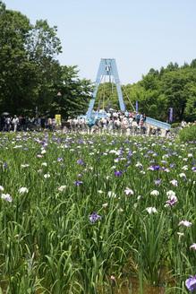 H21.6.7水元公園 005 - コピー.JPG
